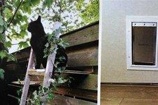 Film: Een klusser voor een kattenluikje