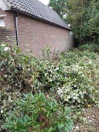 Van verwilderde achtertuin naar gedeelde moestuin