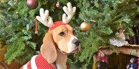 Welk 'rendier' laat jij uit tijdens de kerstdagen?